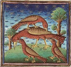 Formation Langue des Oiseaux
